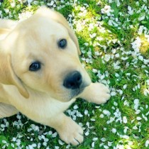 dog_and_spring-wallpaper-1920x600